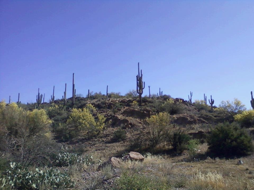 Nothing like an Arizona Cactus!
